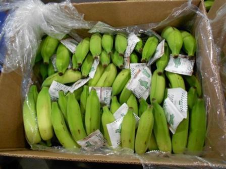 A fruta precisa chegar verde ao seu destino para passar pelo processo de climatização e ser consumida com qualidade