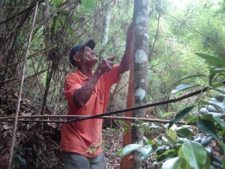 O uso da planta como remédio foi resgatado do conhecimento popular da Zona da Mata Mineira